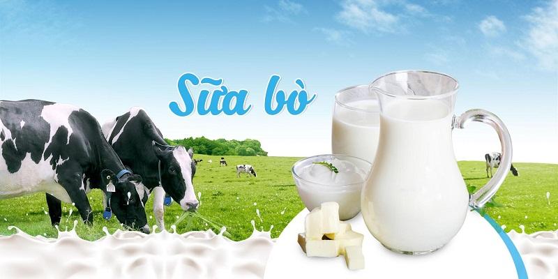 Sữa bò uống liền có thể gây nhiều rối loạn tiêu hóa ở trẻ sơ sinh