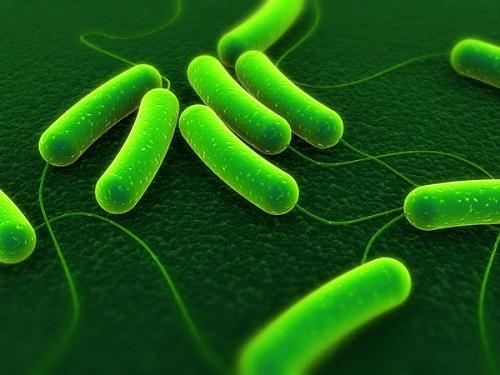 Vi khuẩn E.coli gây nhiễm khuẩn đường ruột