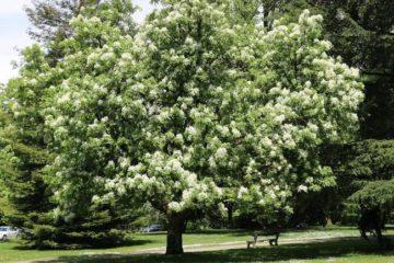Vẻ đẹp của loại cây chữa táo bón kỳ diệu cho trẻ